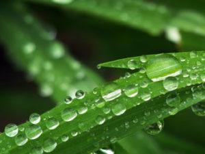 img_left-grass-dew